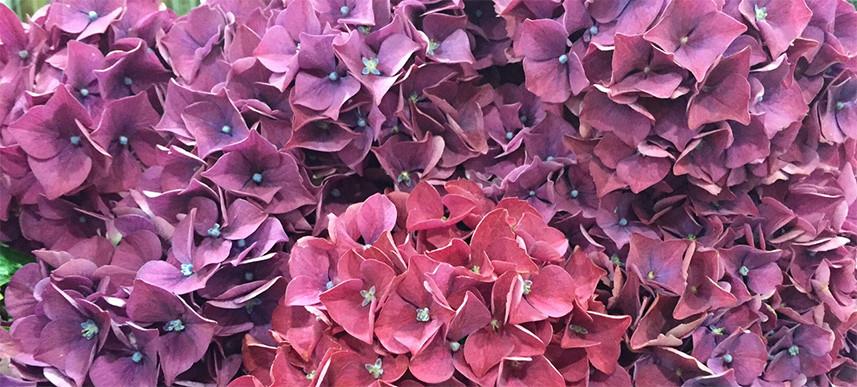 Flower List July - Petal to the Metal - Florist London